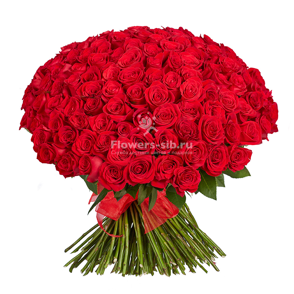 Bouquet Of 151 Roses At The Price 15660 Delivery Of Bouquets